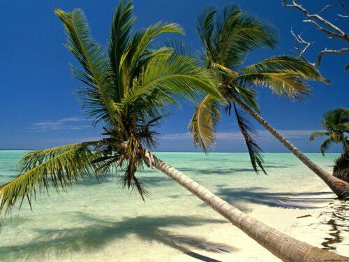 When to go in Dominica Republic?
