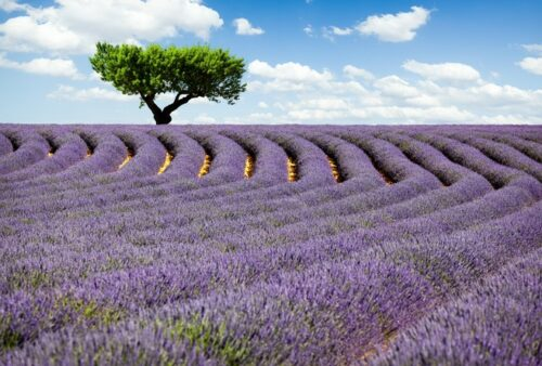 The South of France: attractive to visit at any time of year
