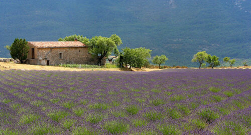Things you have to do in Provence